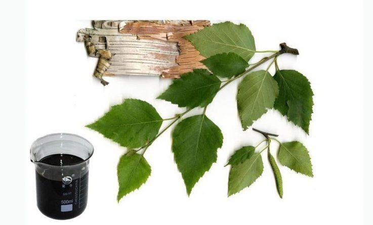 Листья и кора березы