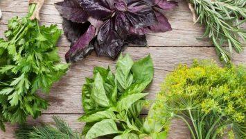 12 самых эффективных трав от геморроя