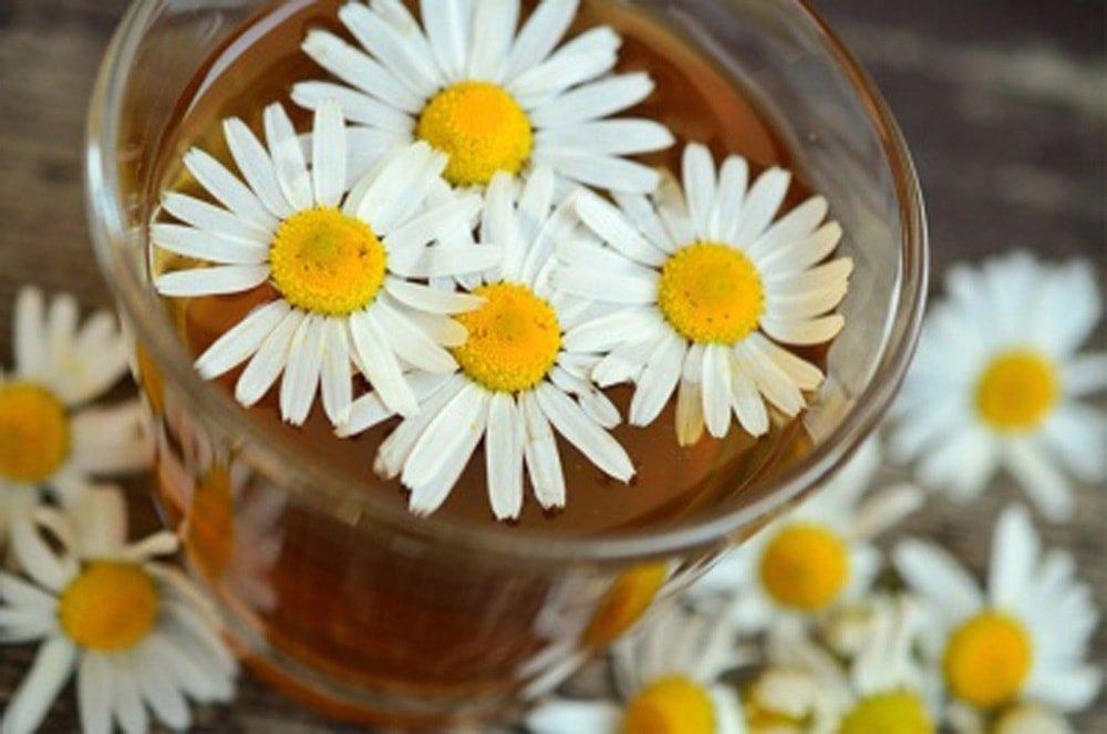 Ромашковые цветки