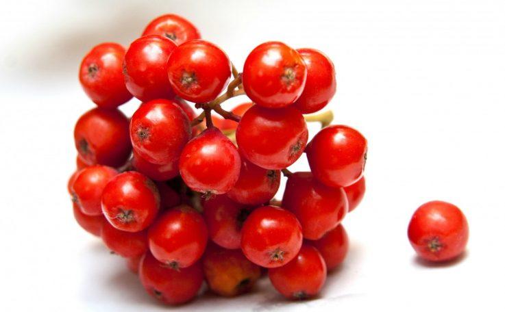 Плоды рябины при геморрое