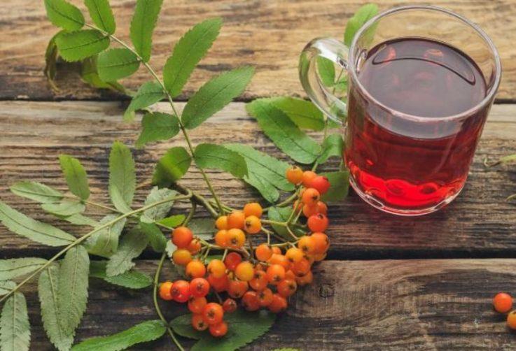 Лечение геморроя плодами рябины
