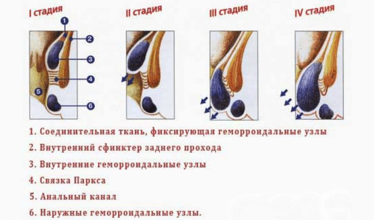 Польза орехов при геморрое